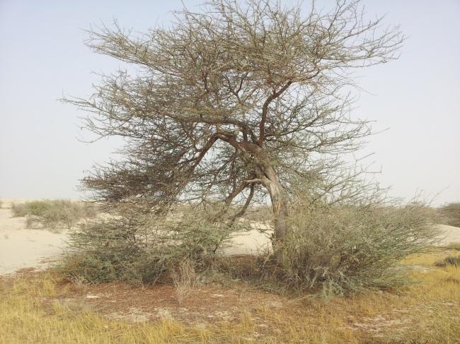 Sidra Tree